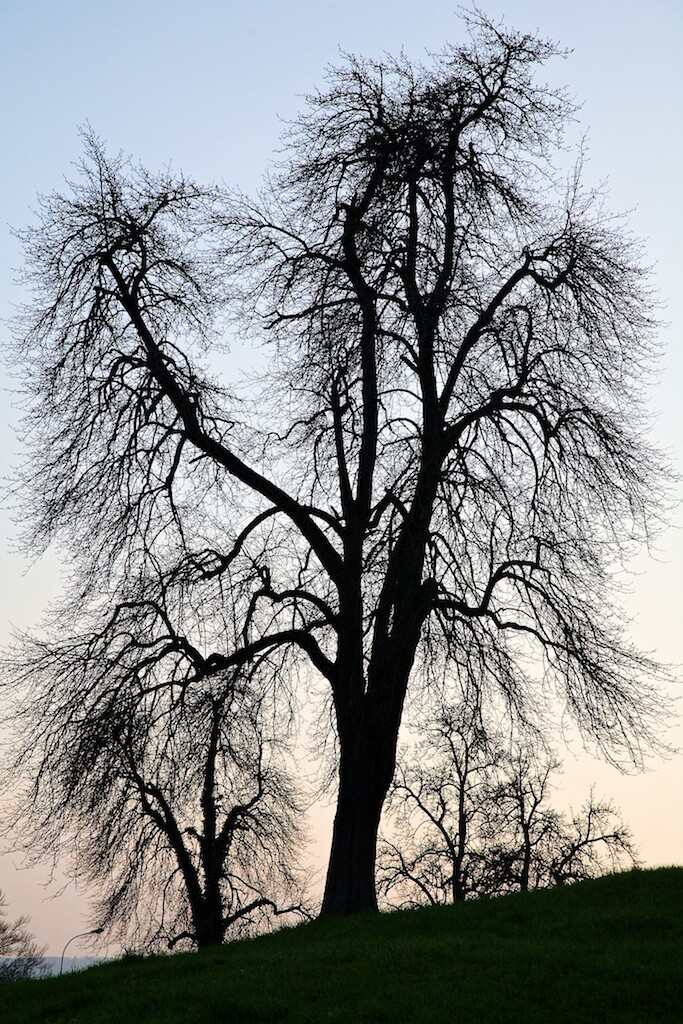 Winter Tree (Lake of Zug)